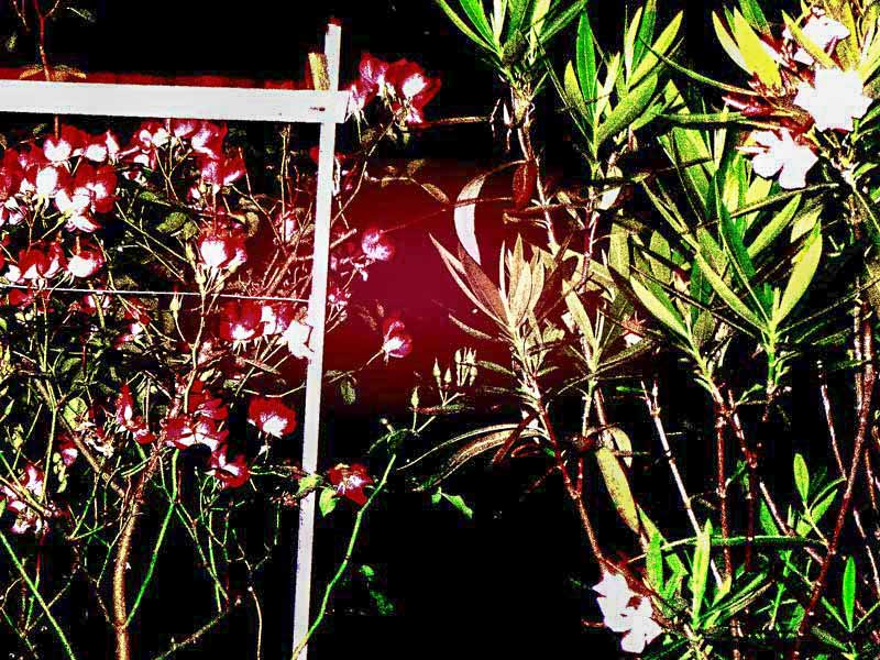 gardens-night-with-roses