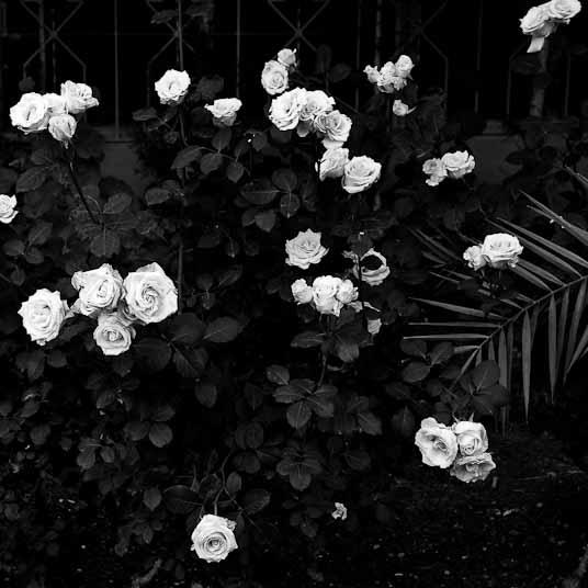 garden-sw