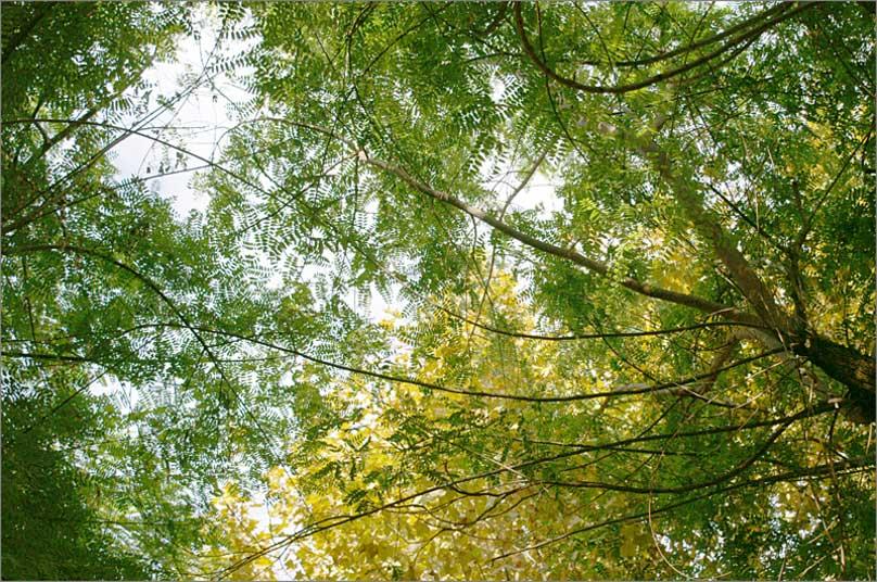 trees-palma